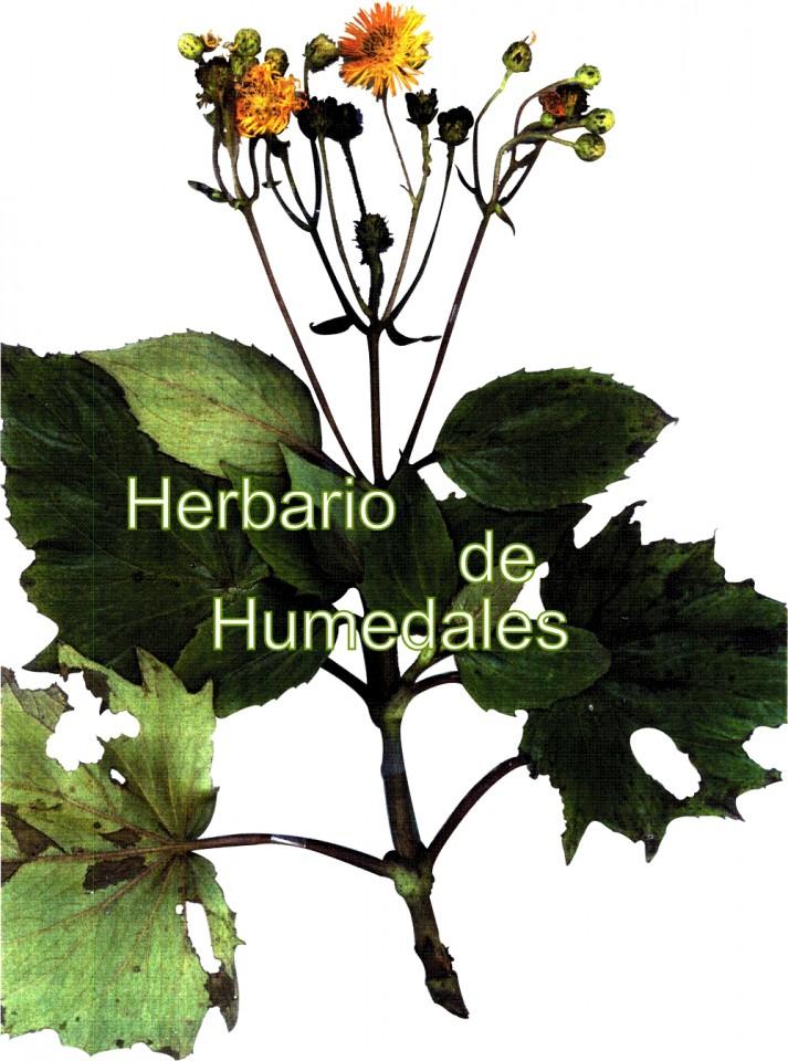 Herbario de Humedales